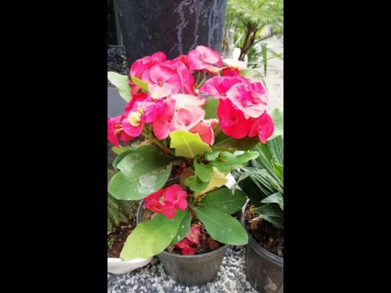 باغ گل بومهن