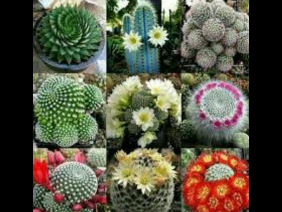 باغ گل بومهن - باغ گل در محدوده بومهن - باغ گل در محدوده پردیس - باغ گل در محدوده رودهن