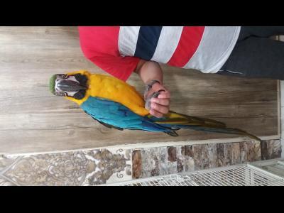 پرنده سرای فرشید
