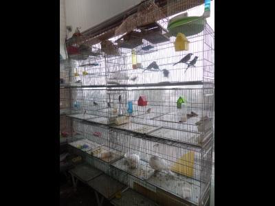 پرنده فروشی پاشا