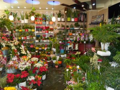 گل نگین - گل فروشی - شهرک اکباتان