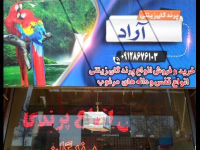 پرنده فروشی آراد - پرنده فروشی - چهارراه مصباح - کرج