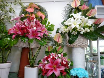 گلفروشی گل کاکتوس - گلفروشی - میدان ونک - ملاصدرا - اتوبان کردستان - شیرازی شمالی - شیخ بهایی - منطقه 3 - تهران