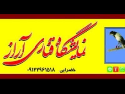 نمایشگاه قناری آراز - فروش تخصصی قناری تهران - نواب