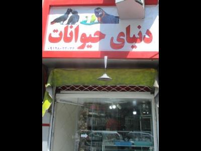 دنیای حیوانات - پرنده فروشی - پت شاپ - گیشا - منطقه 5