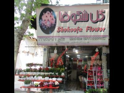 گل شکوفا - گل فروش کاشانک - شمال تهران - بلوار ارتش - منطقه 1 - تهران