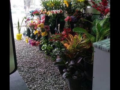گل فروشی سام
